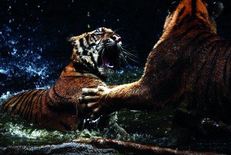 Doğa & Hayvan
